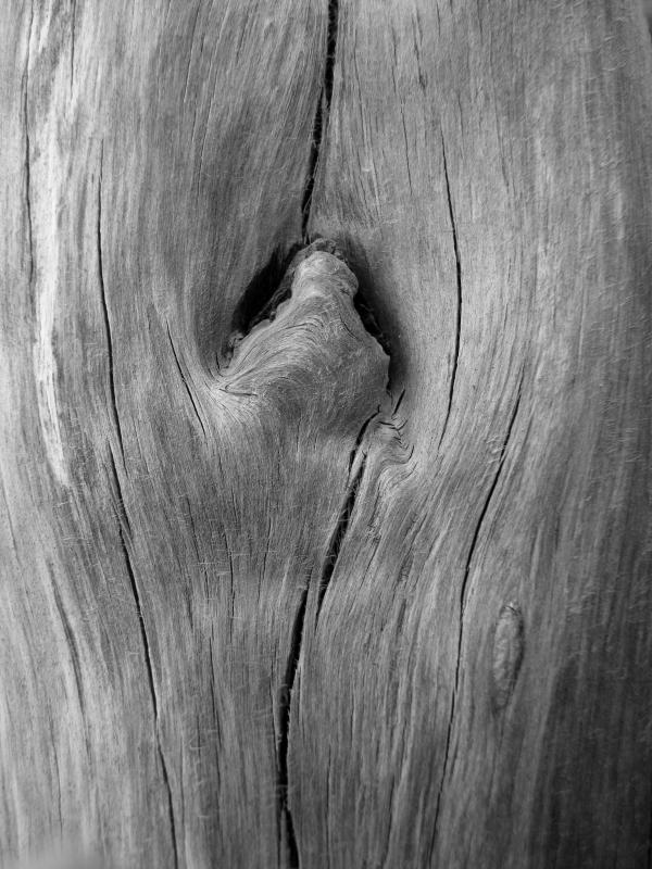 Driftwood_7