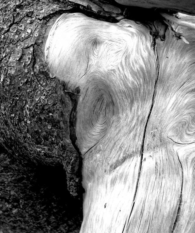 Driftwood_8