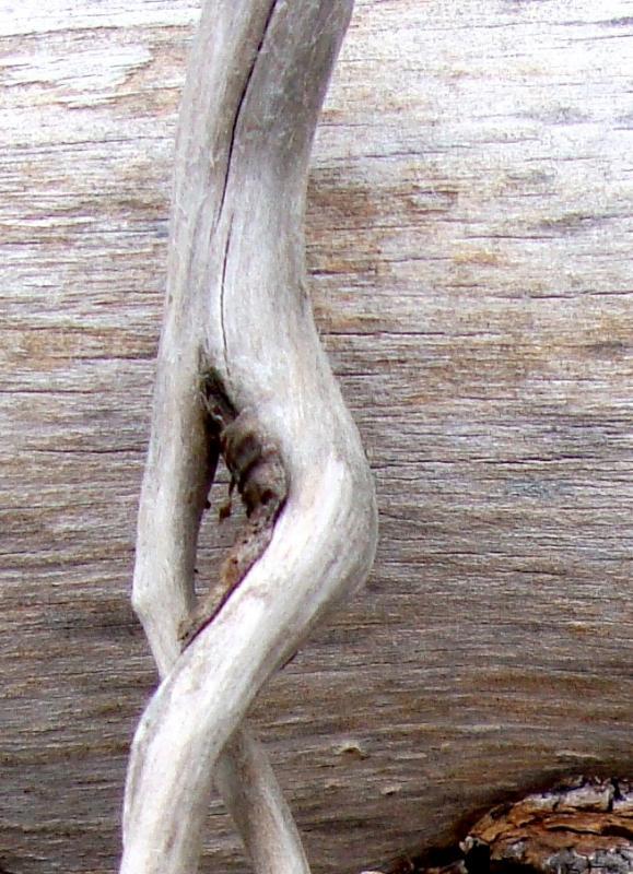 Driftwood_1
