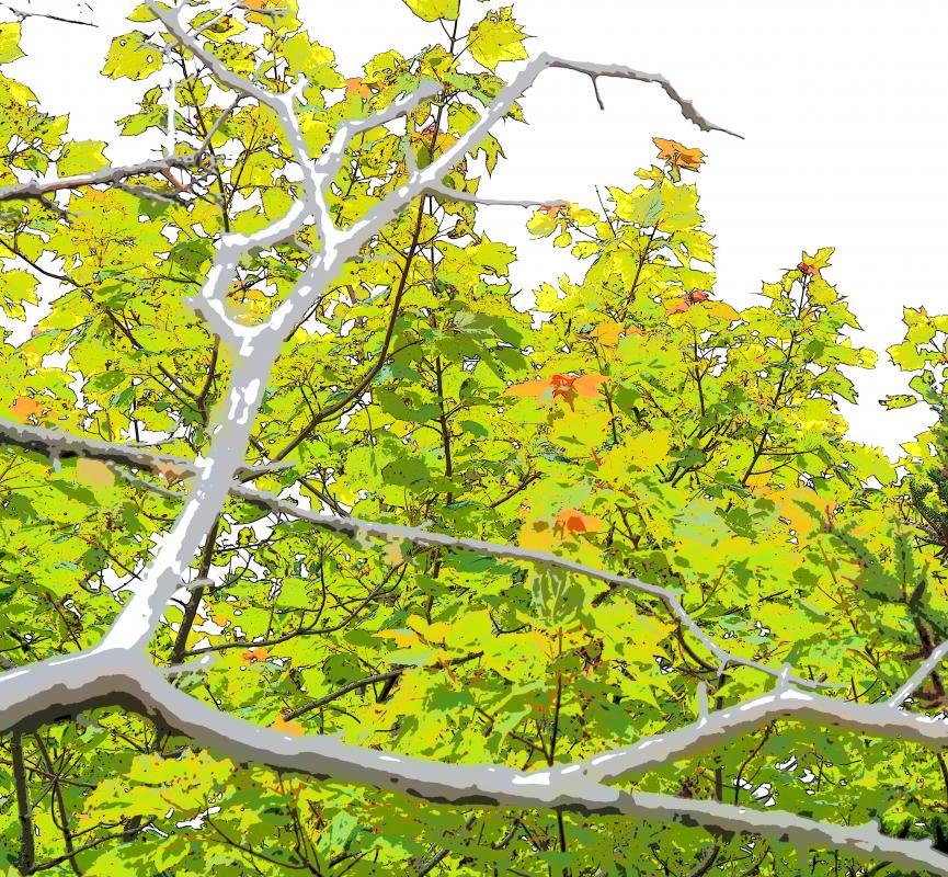 Ur-Wald trifft Farbe II