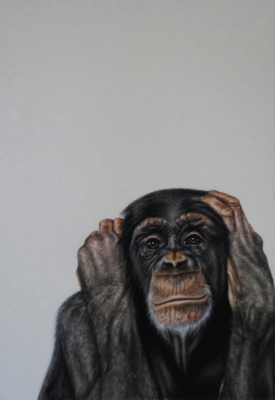 Chimpanse Portrait